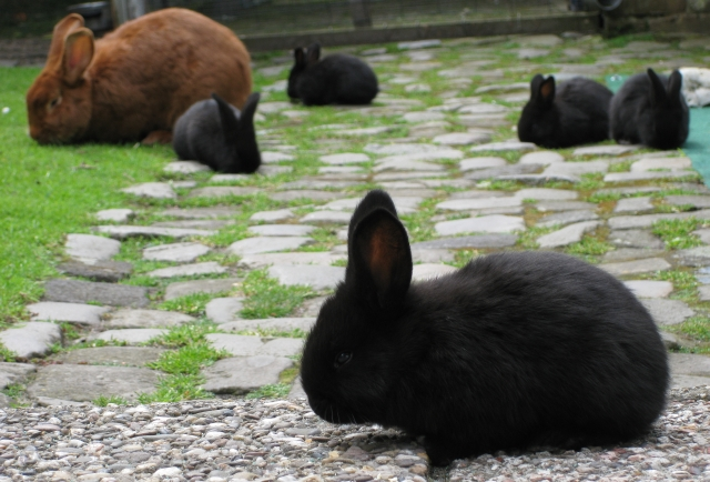7 Rabbits in the garden!