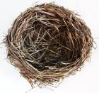 Birds nest!